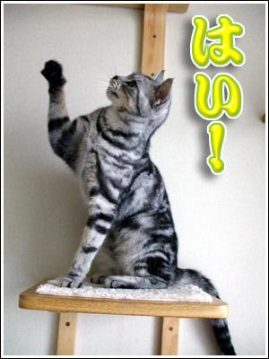 挙手する猫