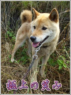 極上の微笑み犬