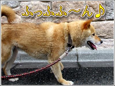 ご機嫌な犬