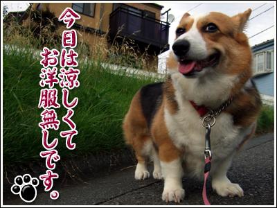 涼し気な犬