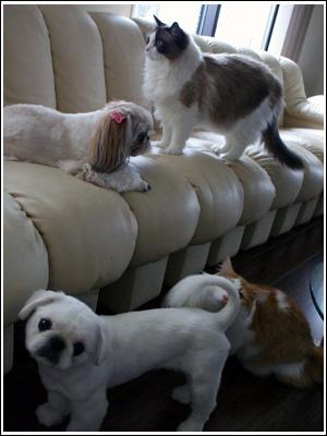 大所帯の犬猫