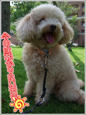 満面の笑みな犬