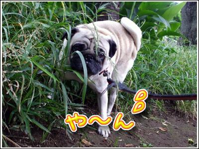 草むらにシッコ犬