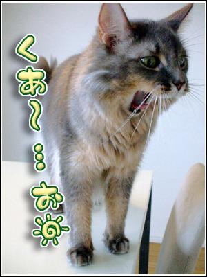 欠伸をする猫