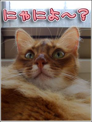 ご満悦な猫