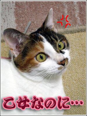 ご立腹な猫