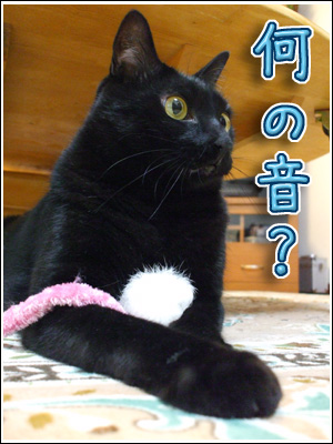 物音に反応する猫