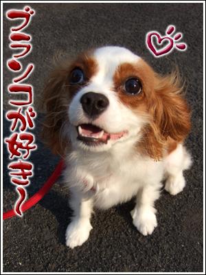 ブランコ好きな犬