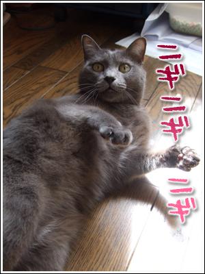 ニギニギする猫