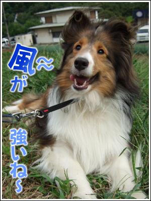 風を受ける犬