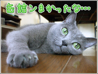 満足顔の猫
