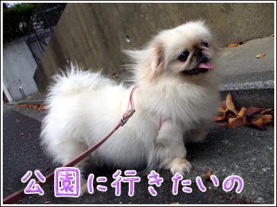 公園に行きたい犬