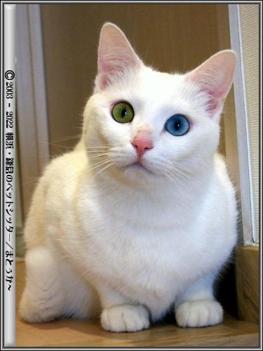 神秘的な猫