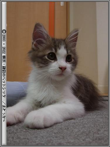 興味津々な仔猫