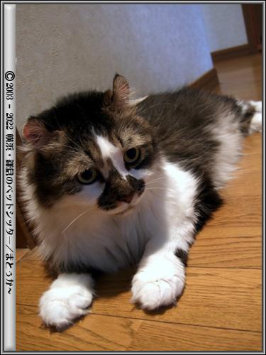 難しい表情の猫