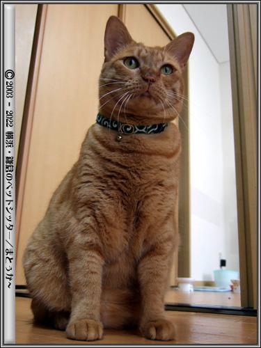 仁王立ちな猫