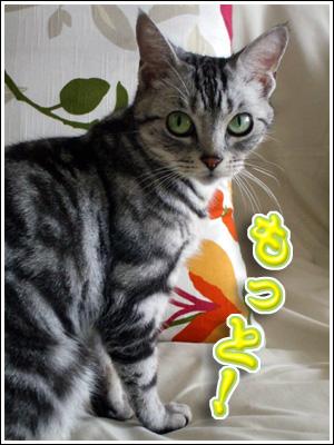 トンボ好きの猫