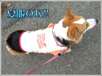夏服を着た犬
