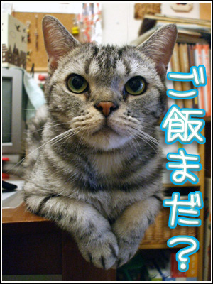 ご飯待ちの猫