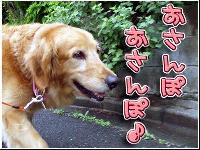 お散歩満喫中の犬