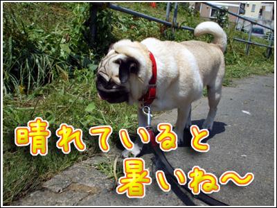 暑さを感じる犬