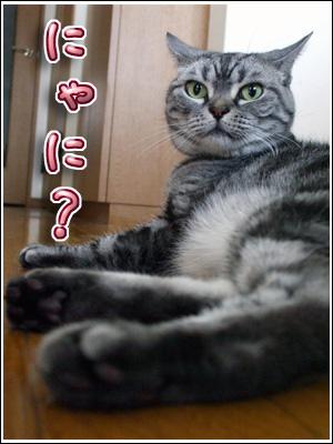 耳パタリの猫