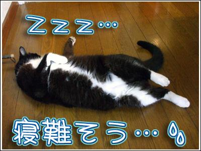 寝苦しそうな猫