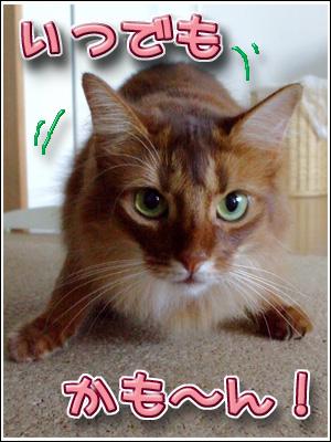戦闘態勢の猫