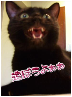 遊びたい猫