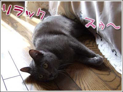 リラックスな猫