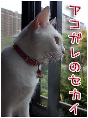 外の世界に憧れる猫