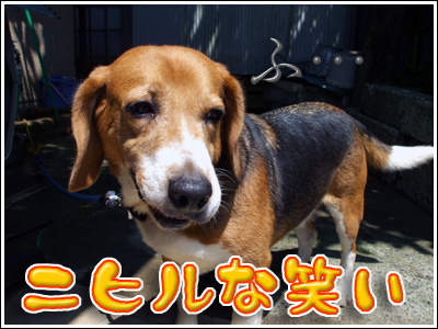 ニヒルな笑みの犬