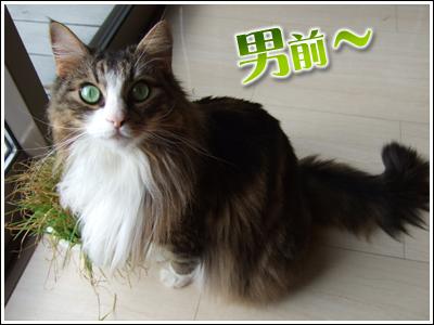 男前の猫写真