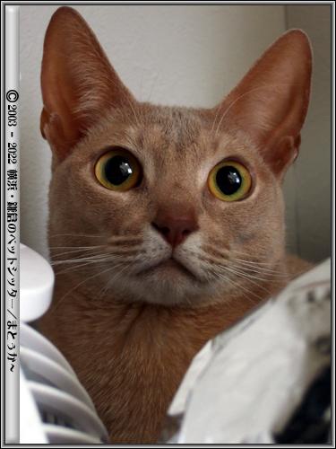 目を見開く猫