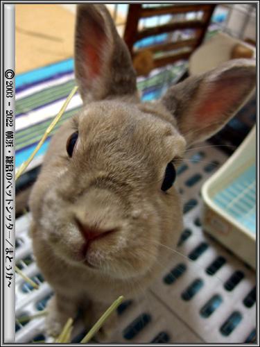 興味津々なウサギ